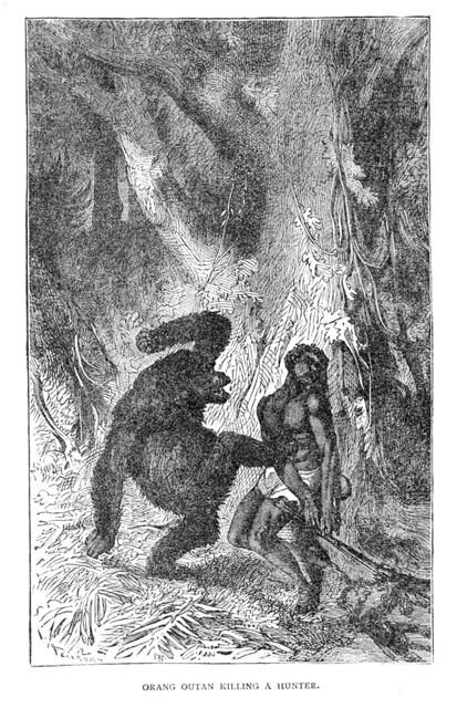 Orang outan killing a hunter