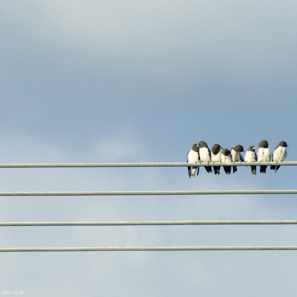 Ipad Wallpaper Love Birds A Line Of Cute Birds Preening E Flickr