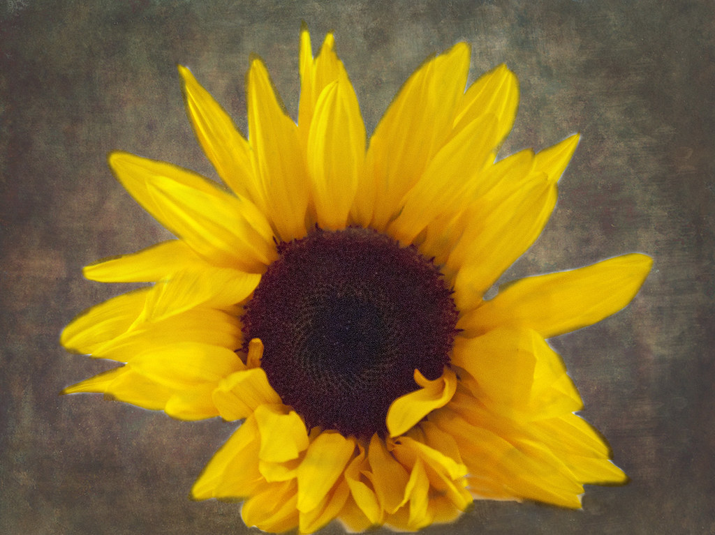 Cleanzor Texture Lisa Gordon Flickr