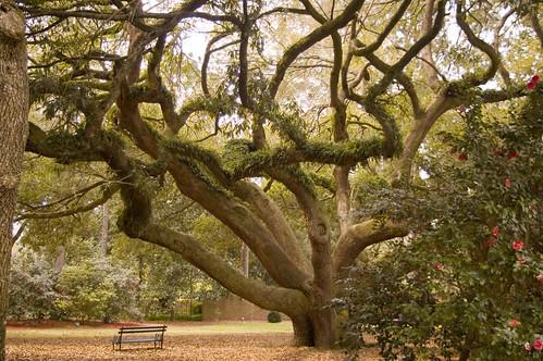 geotagged oak southcarolina aiken hoplandgardens geo:lat=335489418722589 geo:lon=817229515493836