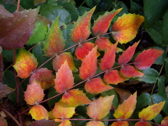 Stems of Color by Nina