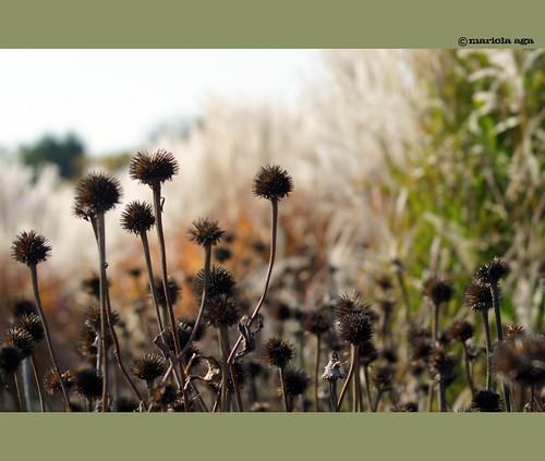 autumn fall nature grass garden dof bokeh glencoe prairie chicagobotanicgarden thegalaxy 25faves