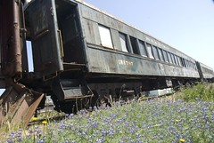 Wildflowers growing next to abandoned train