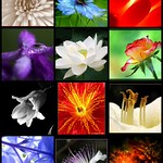 *S♥per Bloom♥! Mosaic #1