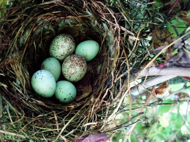 Nest ,June 5