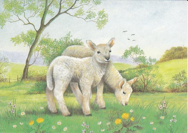 Lambs Painting Postcard