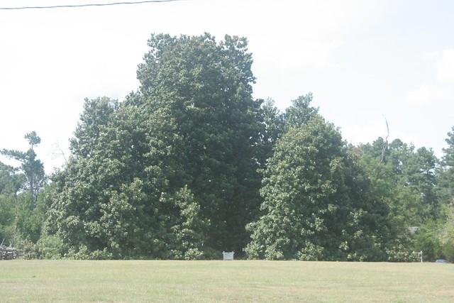 The Largest Magnolia Tree At Historic Washington State Flickr