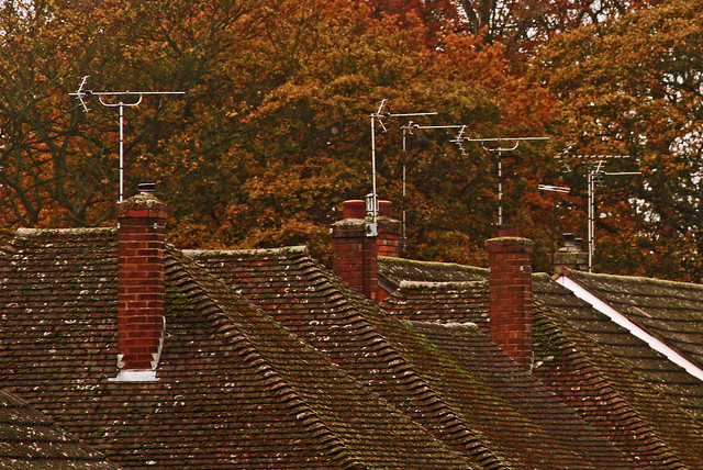 Rooftops With Autumn Colours