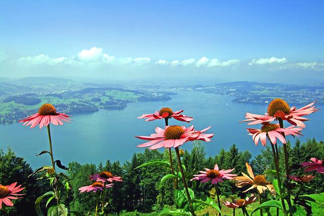 Flowers and lake, Switzerland