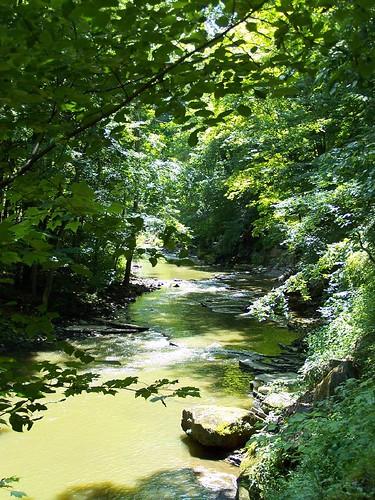 ohio tree green creek vert arbre millcreekpark