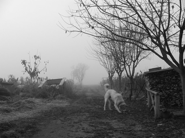 a dog in rural road