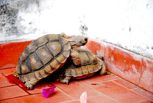 Tortugasaurus Sex | by danbri