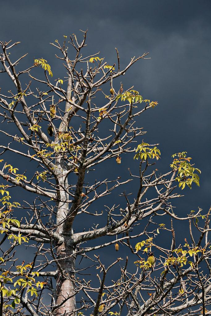 Image: Tree Against a Menacing Sky