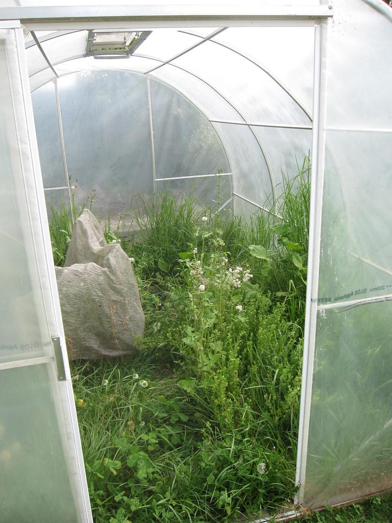 GREENHOUSE WEEDS GREG HEWGILL FLICKR