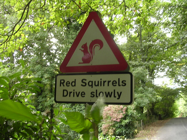 A useful factoid - red squirrels are slow drivers