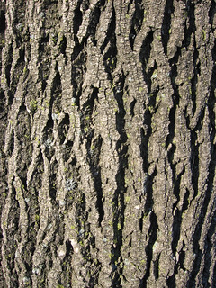 Tree Bark (TB 02) | by QwirkSilver