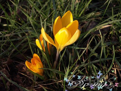 spring  wallpaper vier jahreszeiten spring  benny  flickr