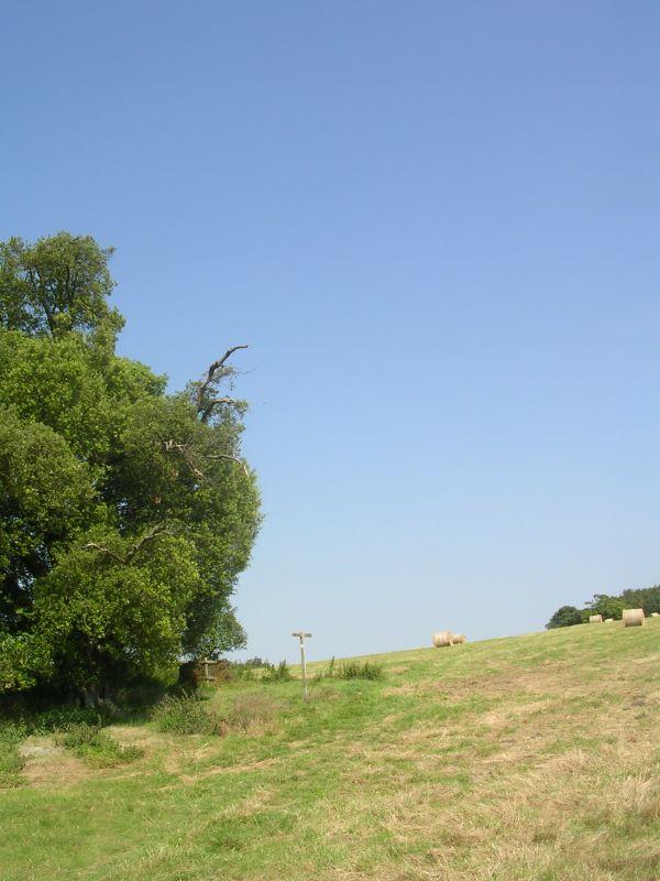 Uphill path Arundel Park. Arundel to Amberley