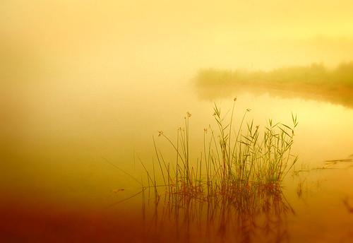 morning water fog sunrise wow gold dawn golden pond rest stillness repose jelke outstandingshots anawesomeshot topofthefog superhearts