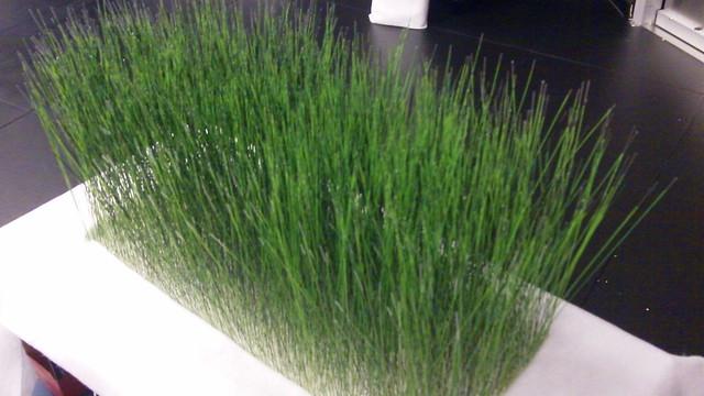 Grass_Final