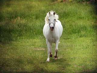 megans horse   by duckpond1