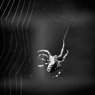 spinning the web | by Hexagoneye Photography