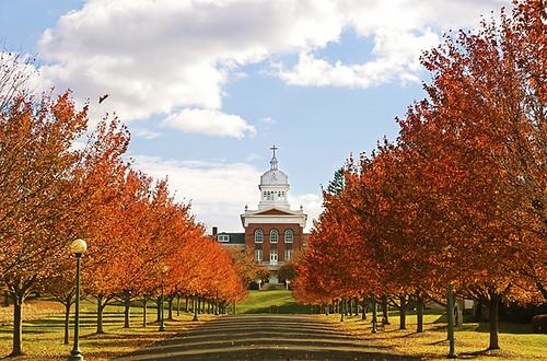 trees red fall symmetry pa topton