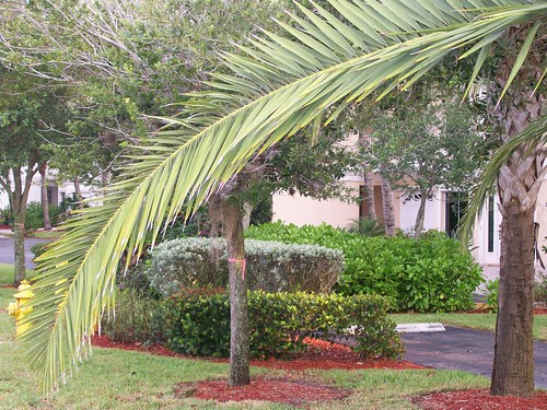 Palm Flourish | by Ron Henzel