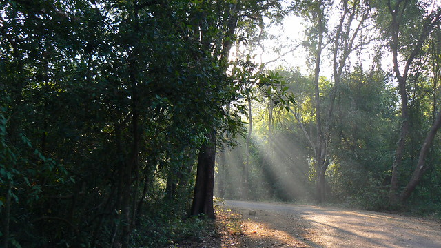 Sun's gentle entry