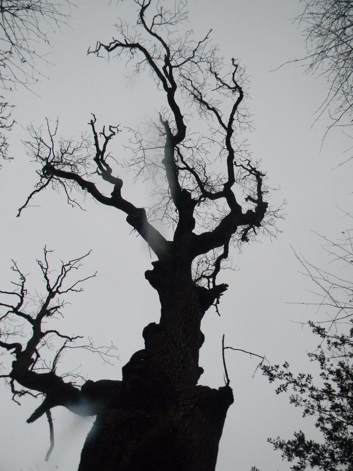 Spooky tree Wendover Circular
