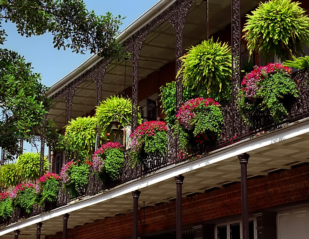 balcony flower baskets New Orleans French Quarter Flower Baskets David Ohmer