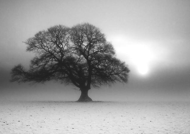 Winter Fog Breaking 2 B+W