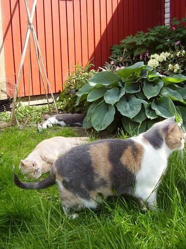 brits in the garden