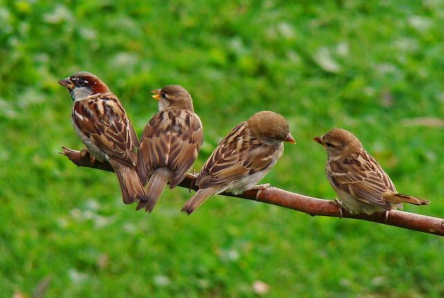 The Sparrow Family