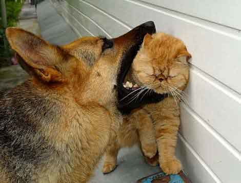 Owned Dog-cat
