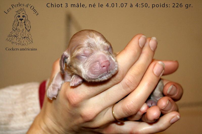 Chiot 3