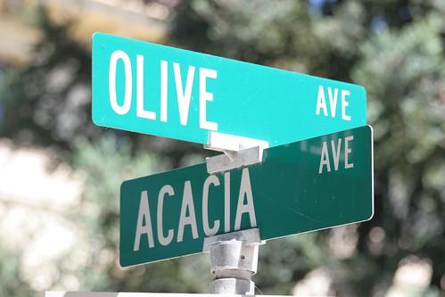 sign-olive acacia