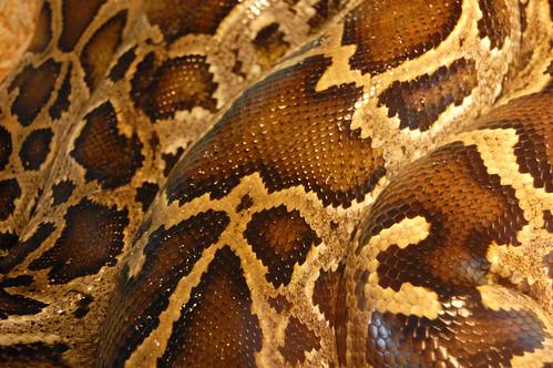 snake | by steve_lodefink