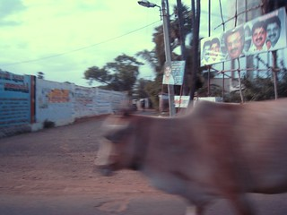cow passing | by likelegos