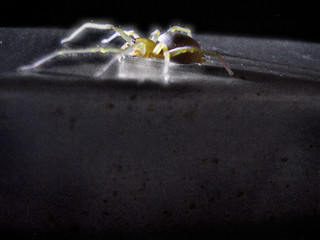 Luminescent Arachnid | by RichTatum