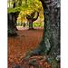 Bosque de Sarria 4