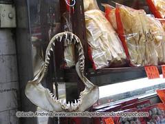 shark jaw at store