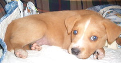 Puppy - Rex 5/19/05