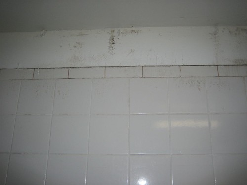 3rd Floor Bathroom Mold and Mildew | by andydr