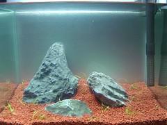 5Litre Fish Tank