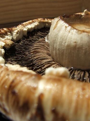 mushroom yumminess