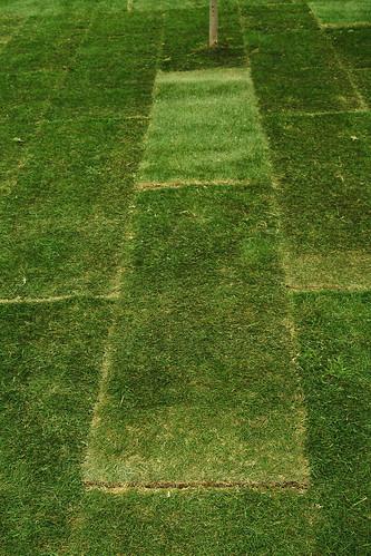 Greener Grass?