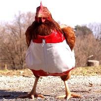 Chicken clothes