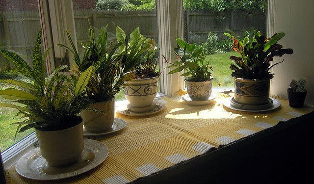 Image result for plants in house,nari