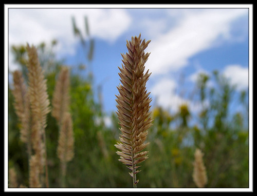 Children of the Wheat | by Clearly Ambiguous